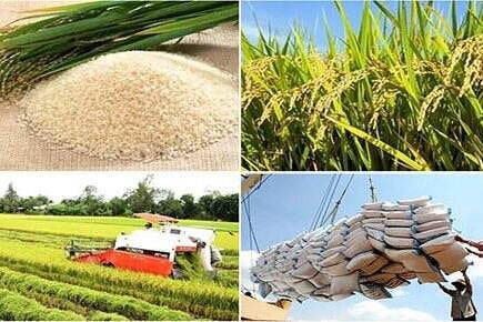 Vietnam exports almost 3.5 million tons of rice in 1H 2020